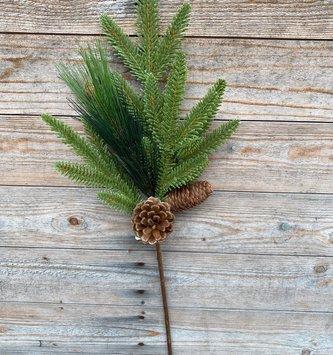 Mixed Fir Pine Stem