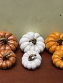 Harvest Pumpkin (2-Sizes/3-Colors)