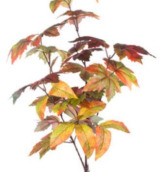 Mixed Fall Leaf Spray