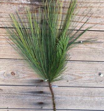 Mixed Pine Evergreen Pick