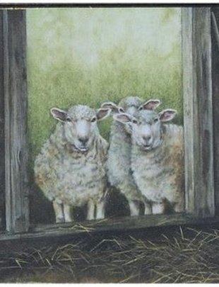 Flock of Sheep Box Print