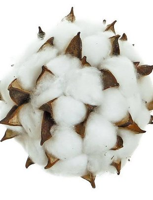 Cotton Pod Orb
