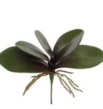 Small Phalaenopsis Leaf Pick