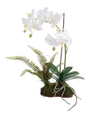White Orchid on Moss w/ Fern (2 Sizes)