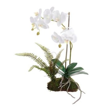 White Orchid on Moss with Fern (2 Sizes)