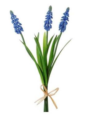 Blue Muscari Bundle
