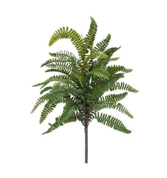 Swordfern Bush