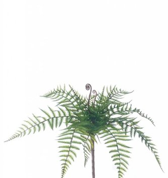 Small Woods Fern Bush