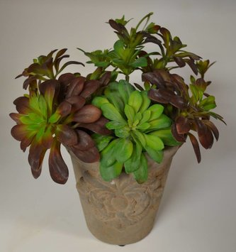 Trailing Hen & Chick Succulent (2 Colors)
