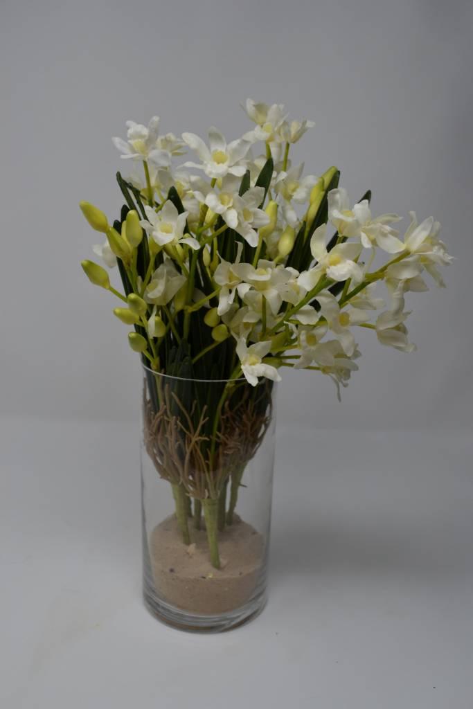 White Mini Cymbidim Orchid