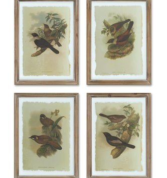 Wood/Glass Framed Bird Print (4 Styles)