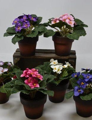 Potted African Violet (6 Colors)