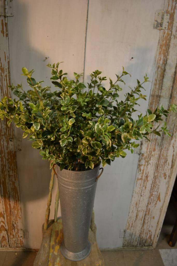 Euonymus Foliage Spray