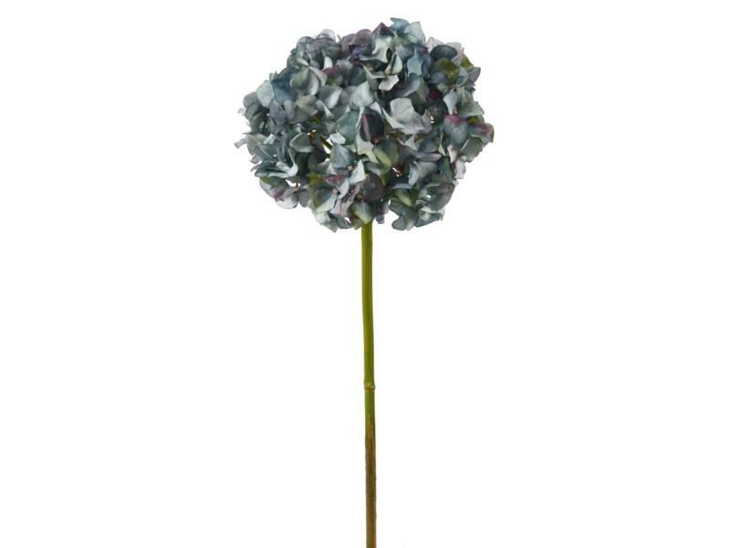 Pointed Petal Hydrangea