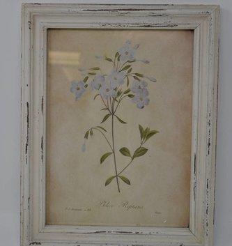 Wildflower Botanical Print (12 Styles)