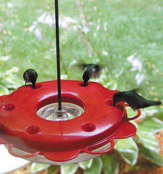 Hummerfest Hummingbird Feeder (2 Sizes)