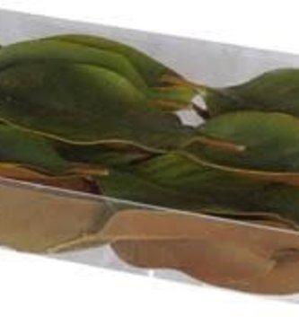Box of 24 Magnolia Leaves