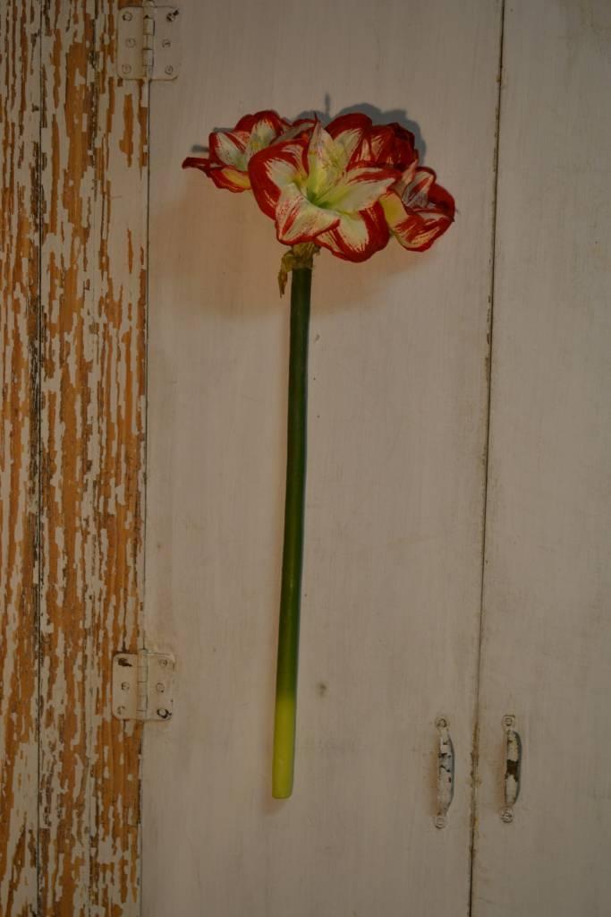 Large Amaryllis