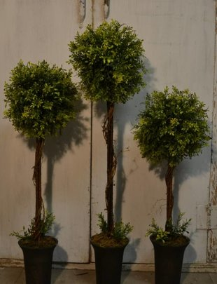 Tealeaf Topiary (3 Sizes)