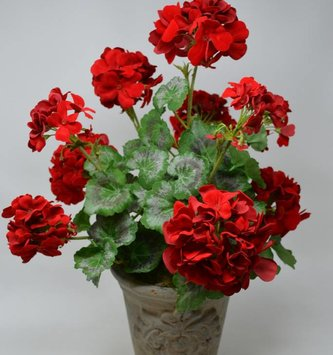 Potted Geranium Custom Arrangement