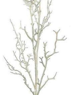 White Birch Branch