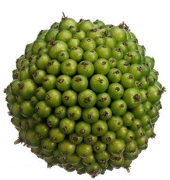 Green Berry Ball (2 Sizes)