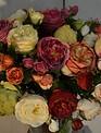 English Rose Bloom