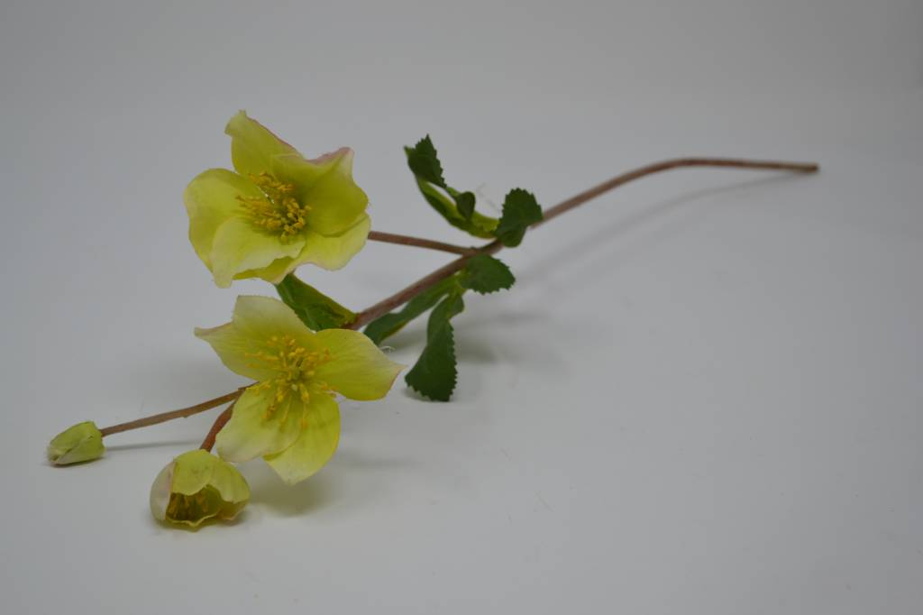 Christmas Rose Spray