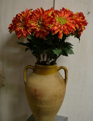 Large Flame Dahlia Stem