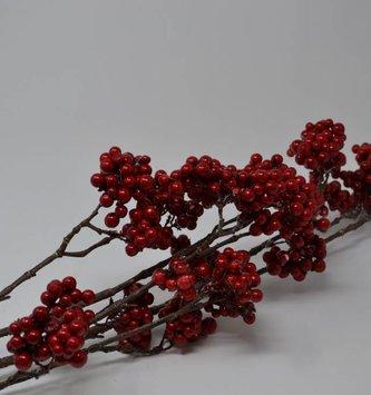 Red Choke Berry Branch