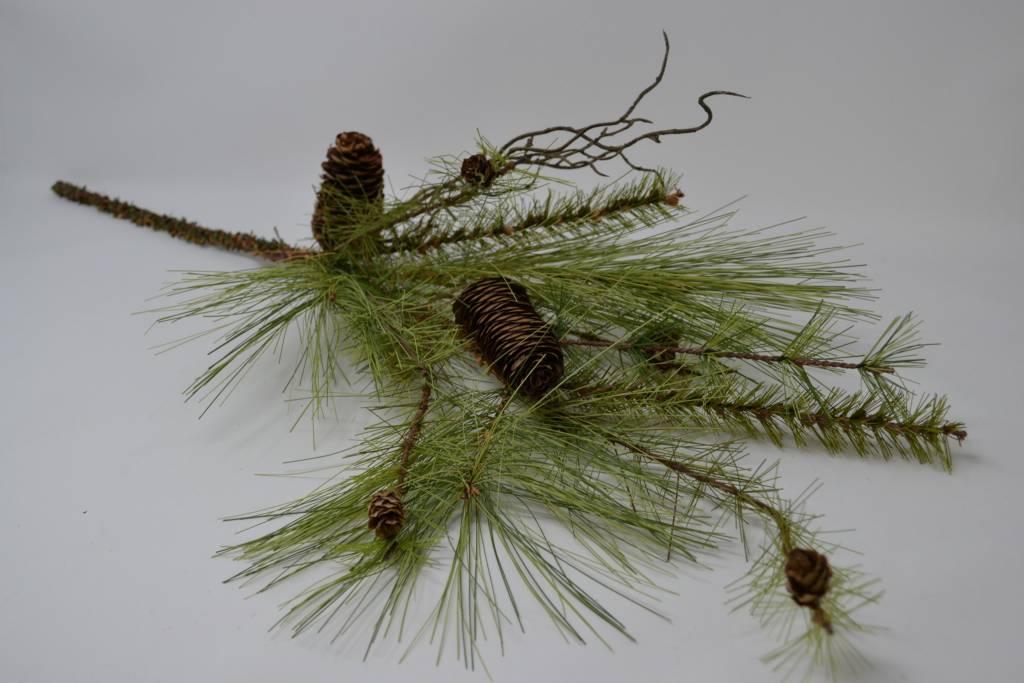Long Needle Pine Branch