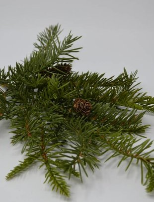 Douglas Fir Spray