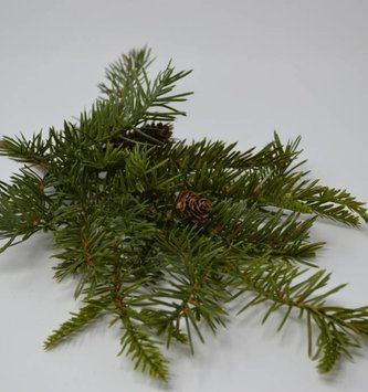 Douglas Fir Pick