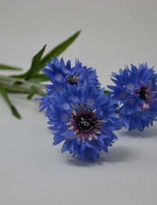 Cornflower Spray