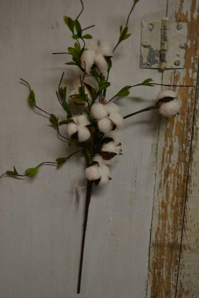 Cotton Willow Spray