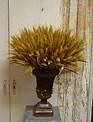 Golden Wheat Bush