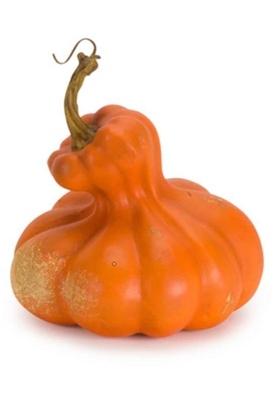 Fall Harvest Squash