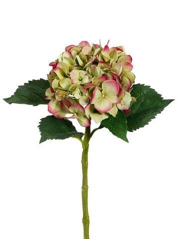 Garden Fresh Hydrangea