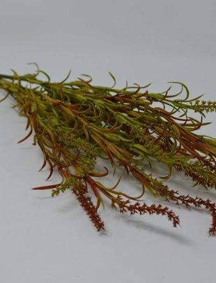 Tassel Grass Bush