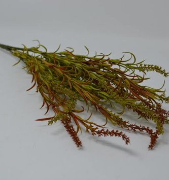 Tassel Grass Bush
