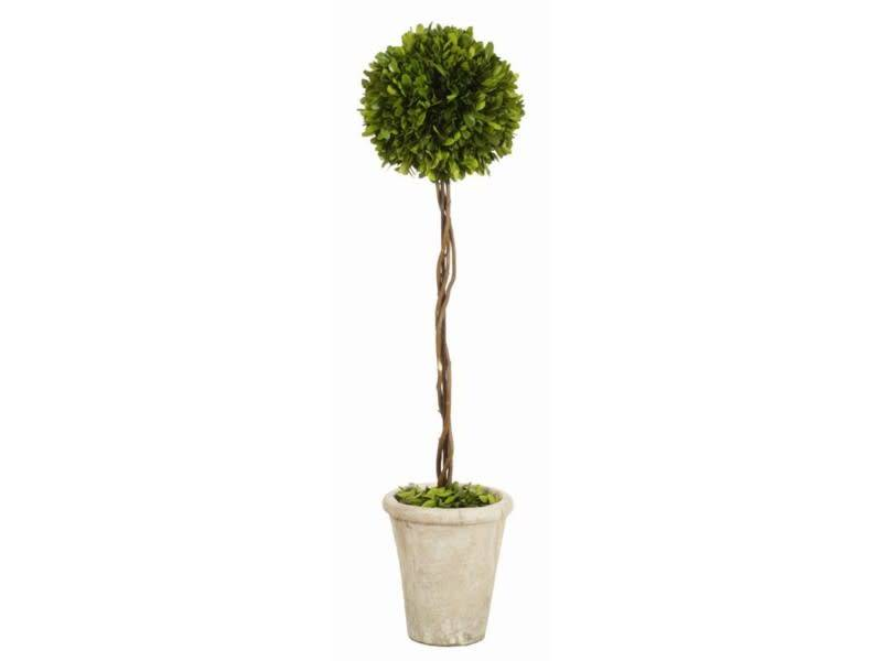 Potted Preserved Boxwood Ball Topiary (2 Sizes)