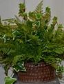 Custom Lace Fern and Ivy Arrangement