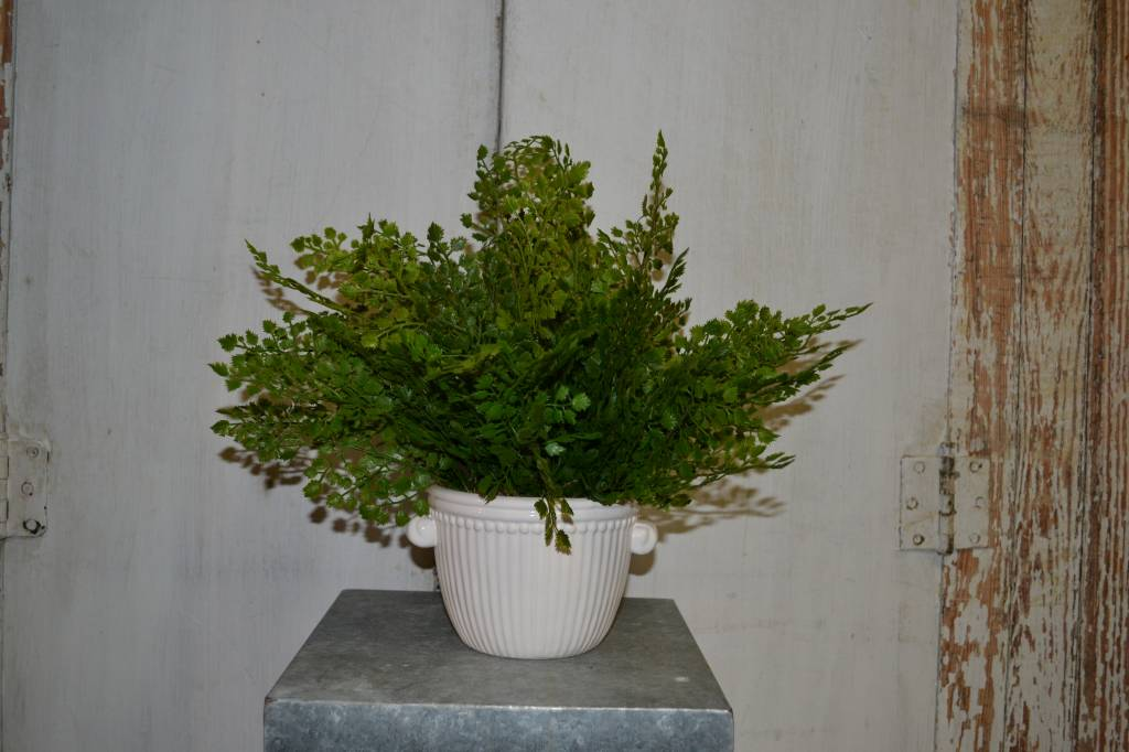 Custom Maidenhair Arrangement