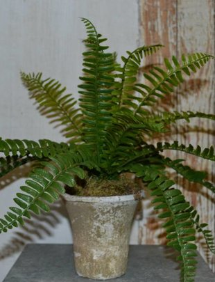 Small Fern Arrangement in Clay Pot