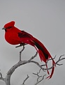 Clip-On Red Black Tail Cardinal