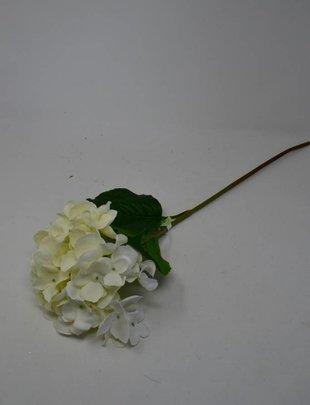 White Hydrangea Blossom Stem