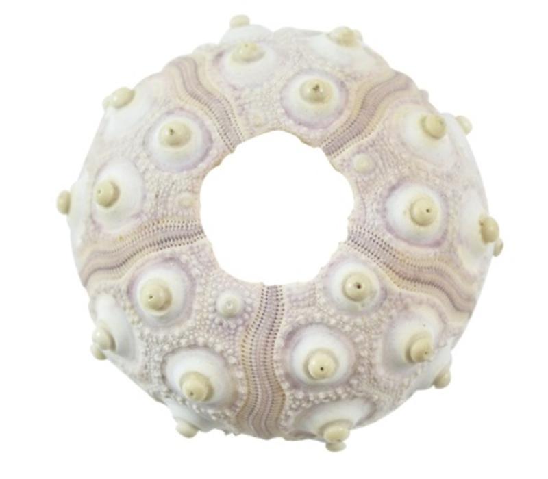 Sputnik Sea Urchin