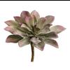 Medium Echeveria Succulent