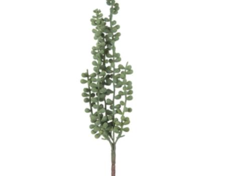 Hobby Lobby Hanging Bean Leaf Succulent