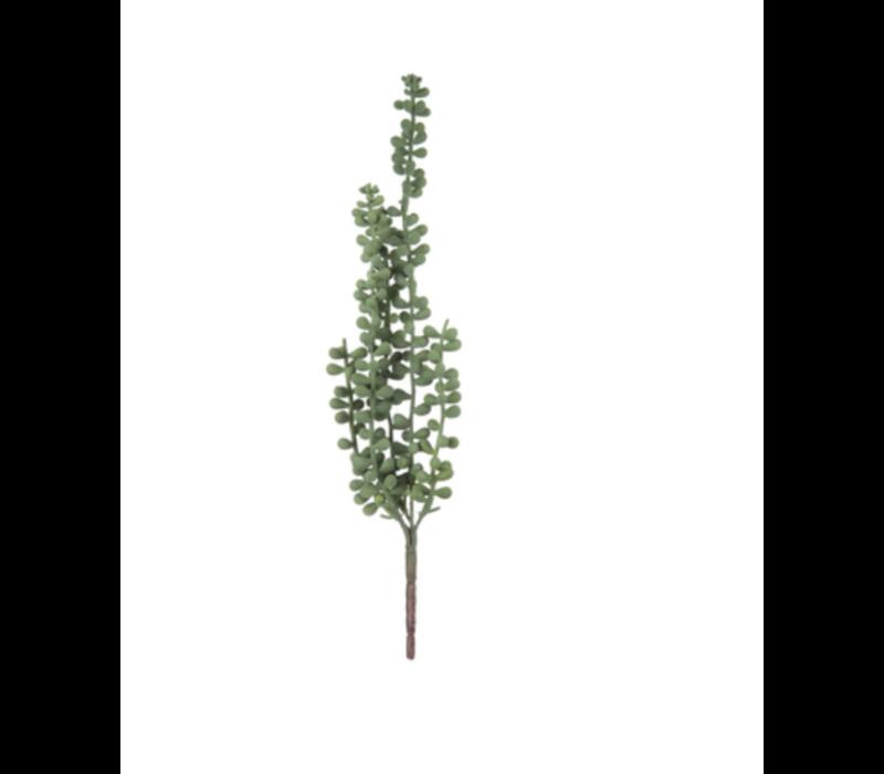 Hanging Bean Leaf Succulent